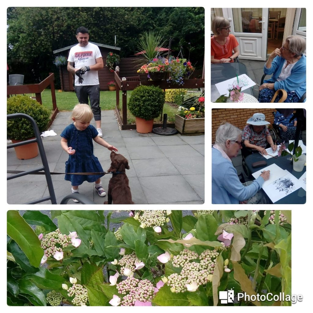 drawing challenge collage in the garden