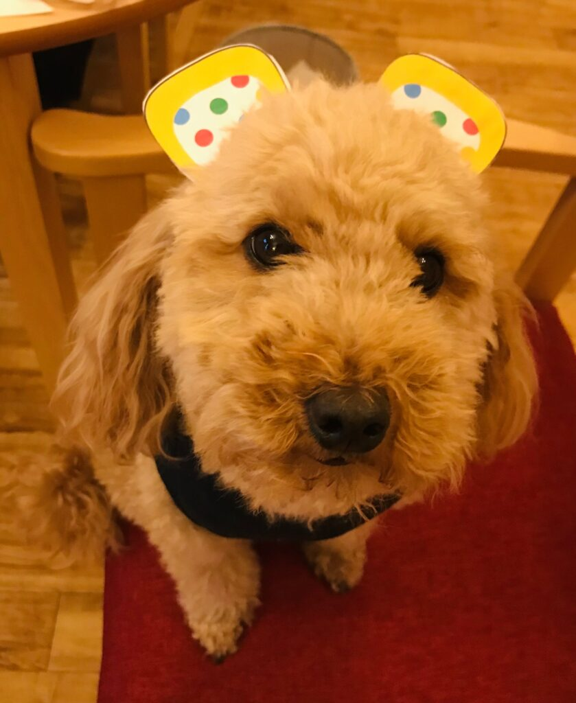 Molly Dog as Pudsey